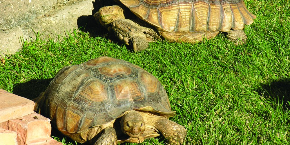 Nature's Seed PB-TORT-5000-F Tortoise Forage Blend, 5000 sq. ft.