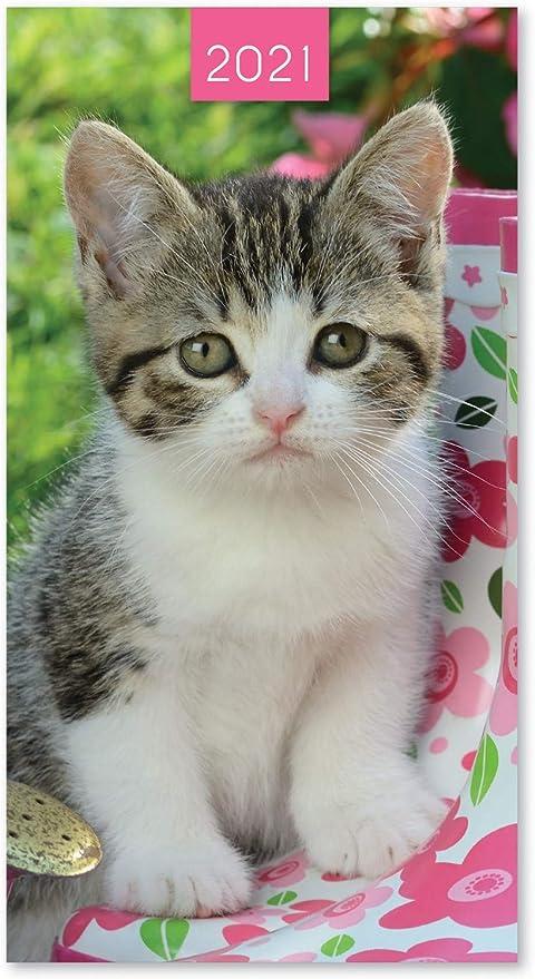 2019 Slim Pocket - Agenda de Gato con Vista semanal y Parte Trasera Suave – Gato en Cesta: Amazon.es: Hogar