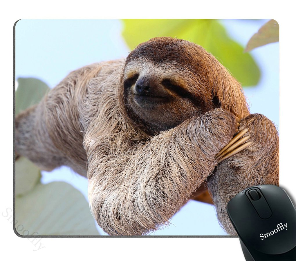 Amazoncom Smooffly Happy Sloth Mouse Pad Funny Sloth In Costa