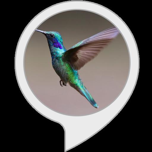 BirdPedia