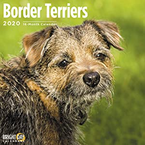 2020 Border Terriers Wall Calendar by Bright Day, 16 Month 12 x 12 Inch, Cute Dogs Puppy Animals Coqetdale Redesdale