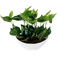 Pindia Artificial Money Plant Tree Green Flowers with Pot