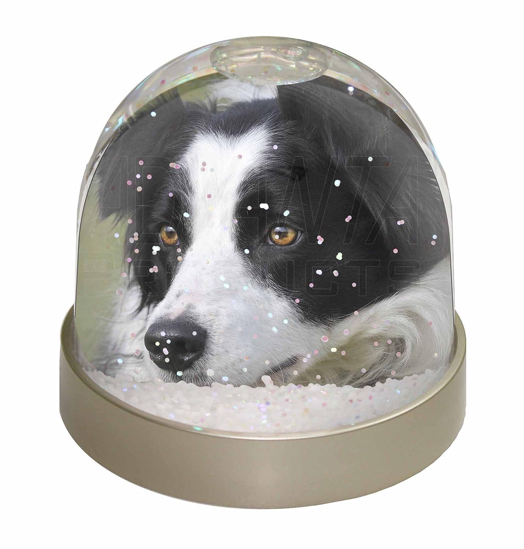 Advanta Border Collie Dog Snow Dome Globe Waterball Gift, Multi-Colour, 9.2 x 9.2 x 8 cm Advanta Products AD-BC9GL