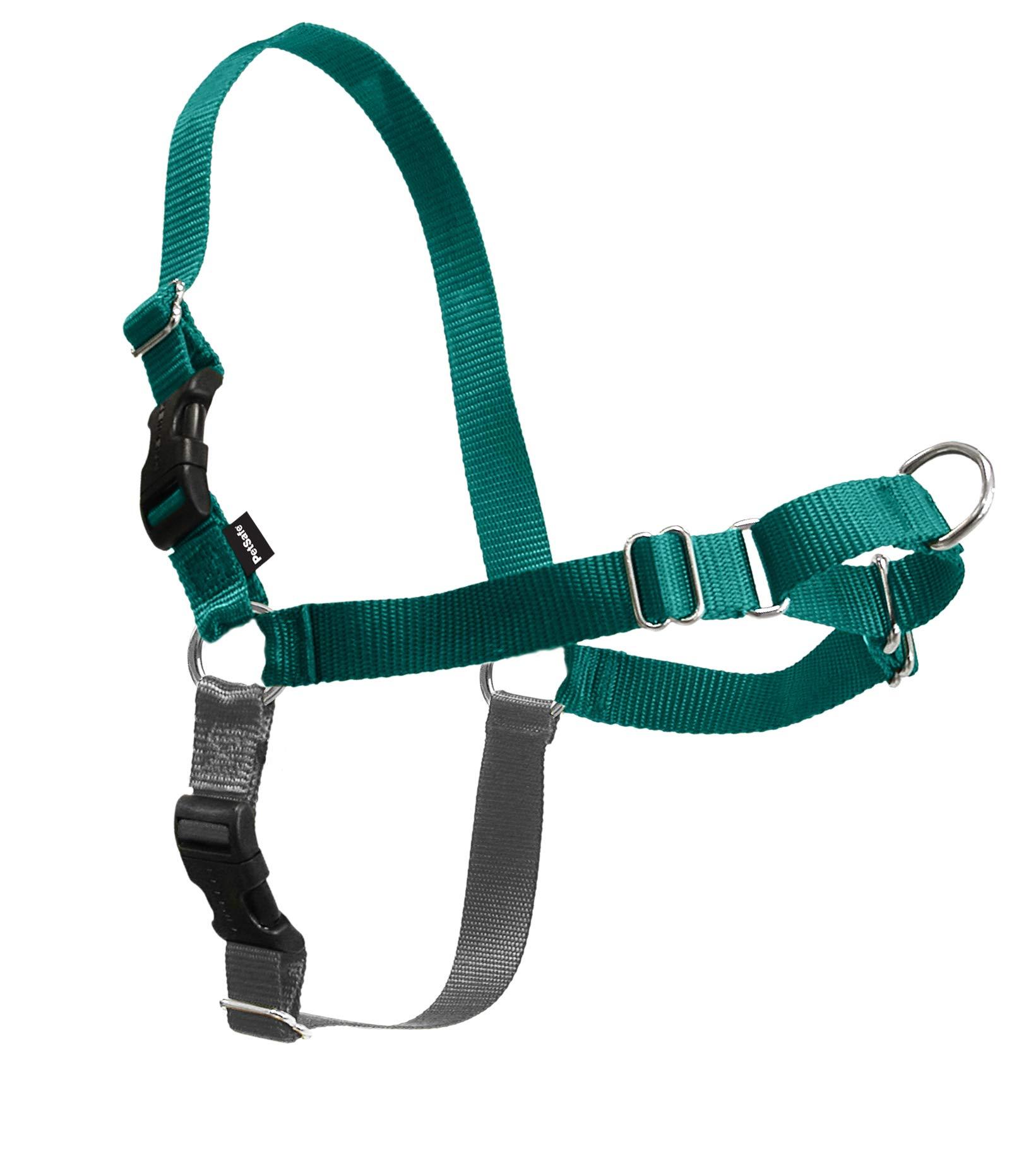 PetSafe Easy Walk Dog Harness, Teal, Medium by PetSafe
