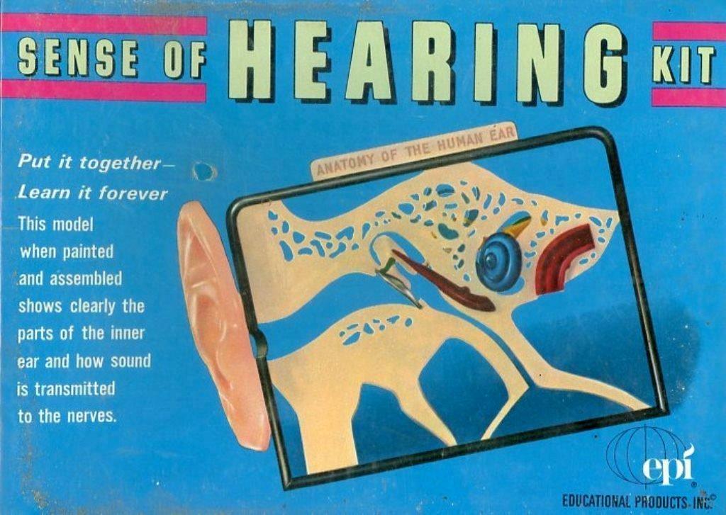 Amazon Epi Educational Products Inc Sense Of Hearing Anatomy Of
