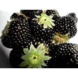 Exotic Plants nera fragola - - 30 semi