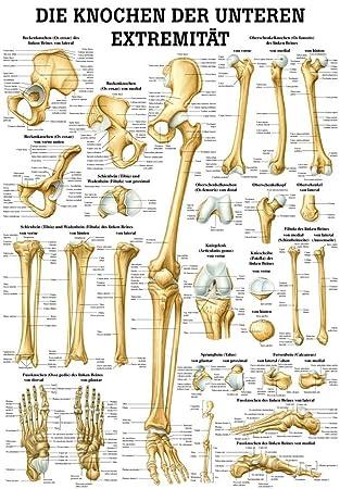 Los huesos de la parte inferior de Extremidad Mini Póster de ...