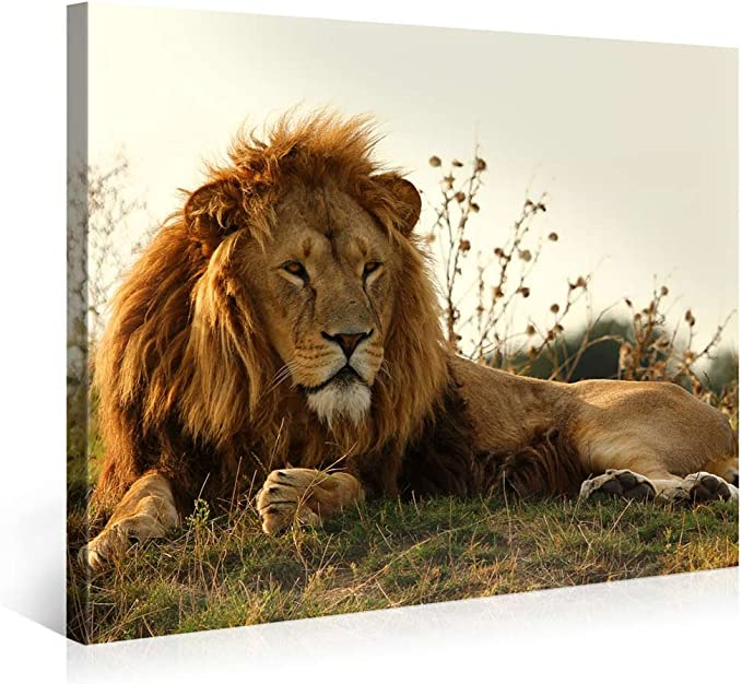 Lion Caesar Canvas Print Large Picture Wall Print
