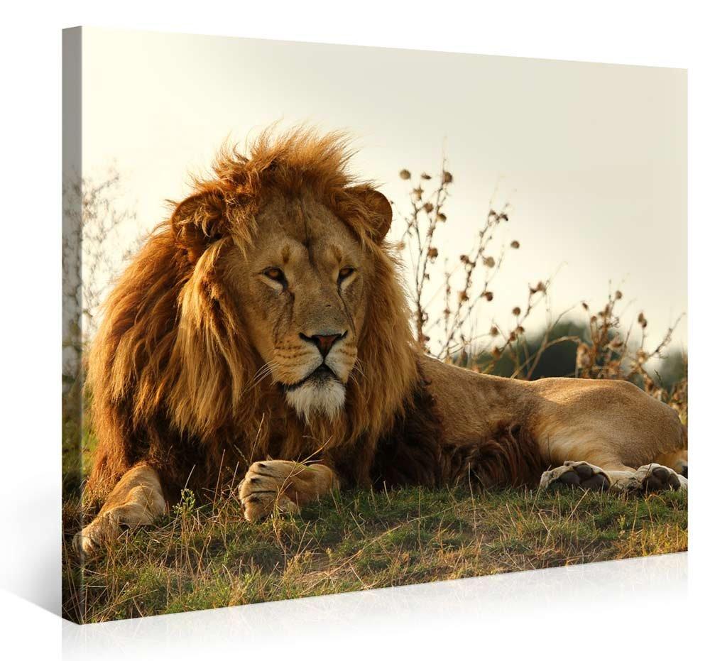 lion picture art frames. Black Bedroom Furniture Sets. Home Design Ideas