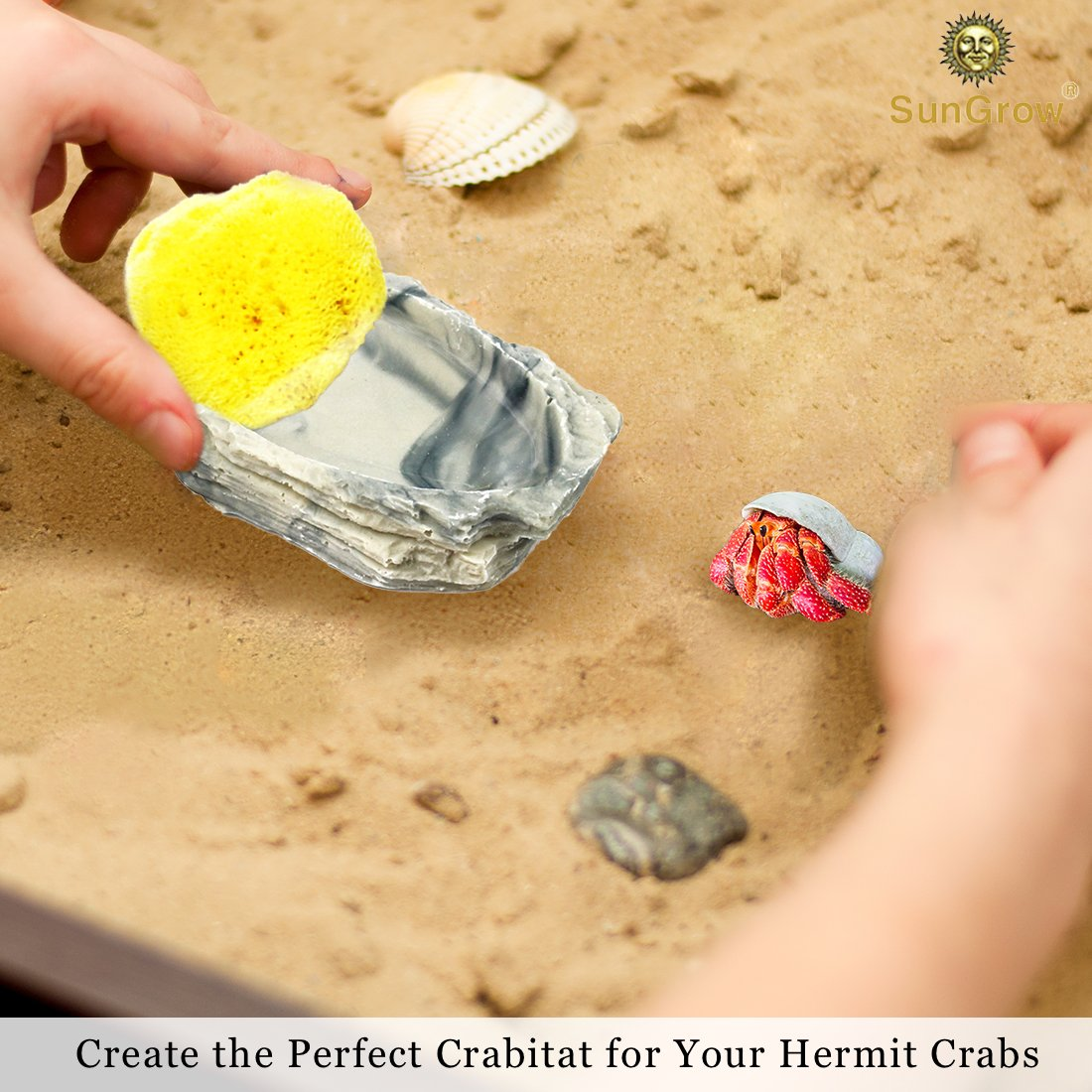 4-Pack Sea Sponges for Hermit Crabs --- Moisture Cocoon that keeps crabs Moist and Hydrated - Prevents Accidental Drowning and Suffocation - 100% All Natural and Safe
