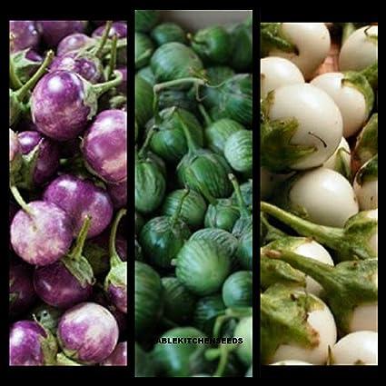 Asian grow seed veg personal