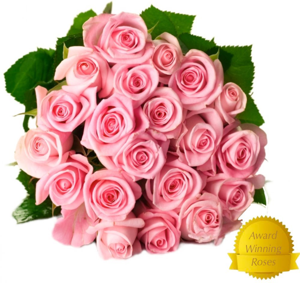 50 Pink Fresh Roses by Spring in The Air - Make Your Loved Ones Feel Appreciated - No Damage was Done to The Environment When Growing These Roses - Huge Fragrant Blooms - Beautifully Packaged by Spring in the Air