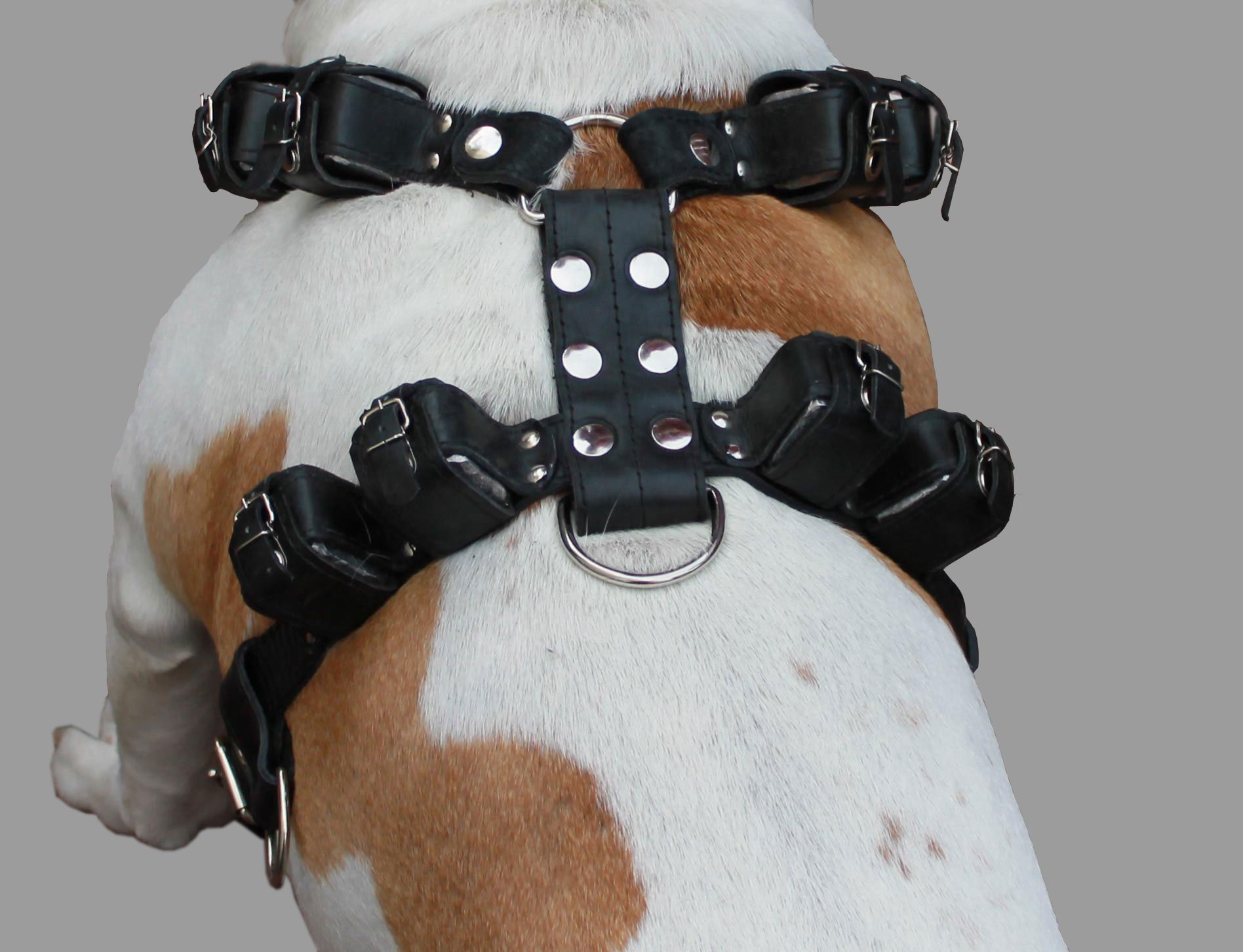 8lbs Black Genuine Leather Weighted Pulling Dog Harness for Exercise and Training. Fits 33''-39'' Chest, by Dogs My Love (Image #2)