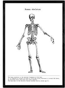 Nacnic Skeleton Poster humano.Calavera. Anatomy of The Human Body. Muscles and Bones. Sheets with Parts of The Human Body. 8'x11' Size