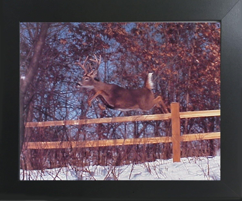 CANVAS Whitetail Deer Herd Art print POSTER