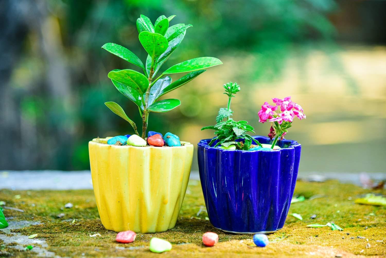 Ceramic Planter small planter yellow planter Blue planter