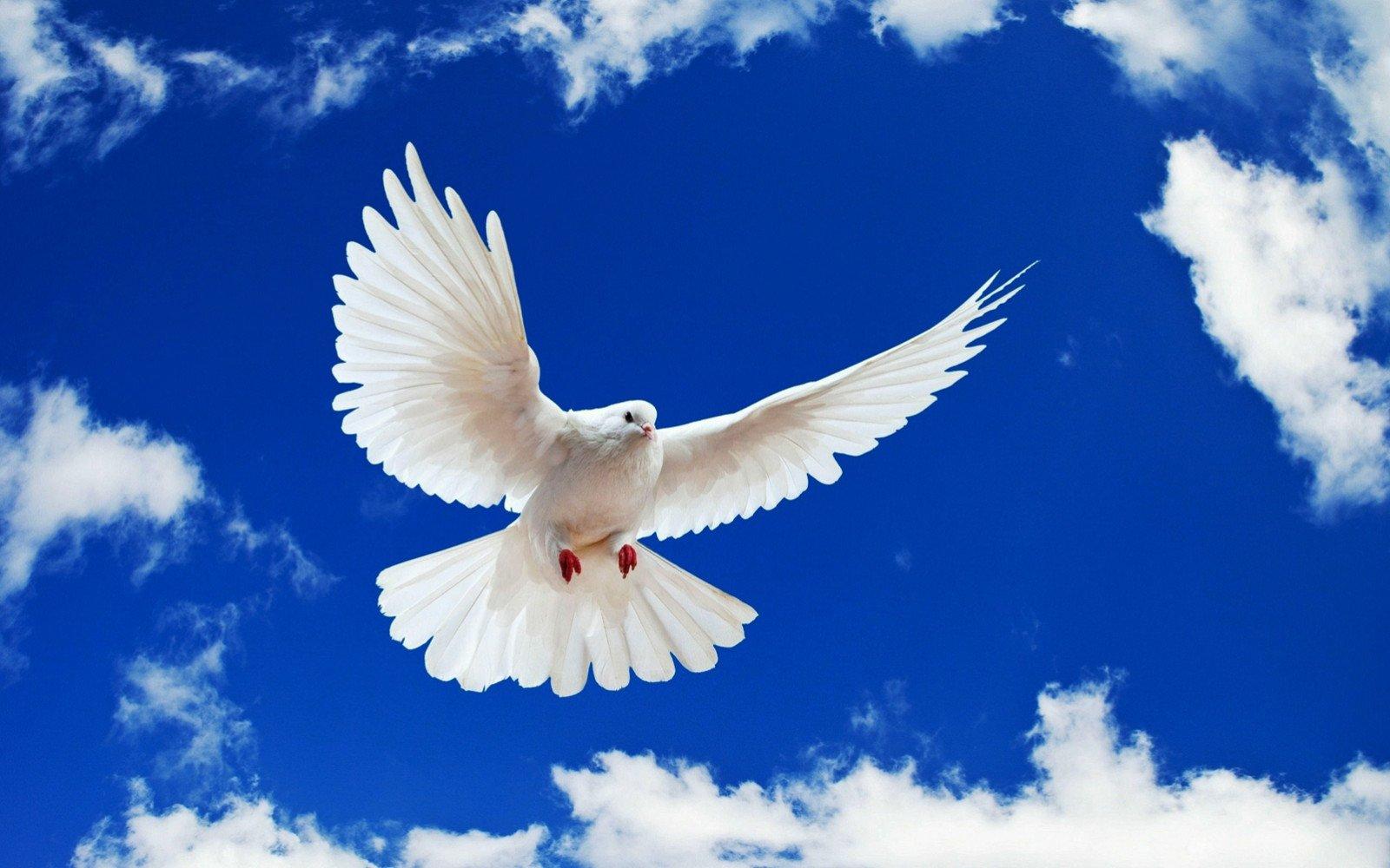 CHOIS Custom Films CF3339 Animal Flying Pigeons Glass Window Privacy DIY Stickers 3' W by 2' H