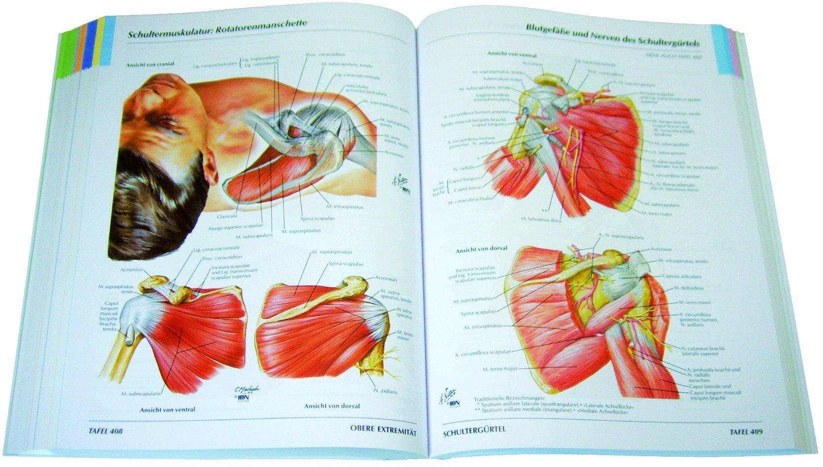 Netter - Atlas der Anatomie: Amazon.de: Bücher