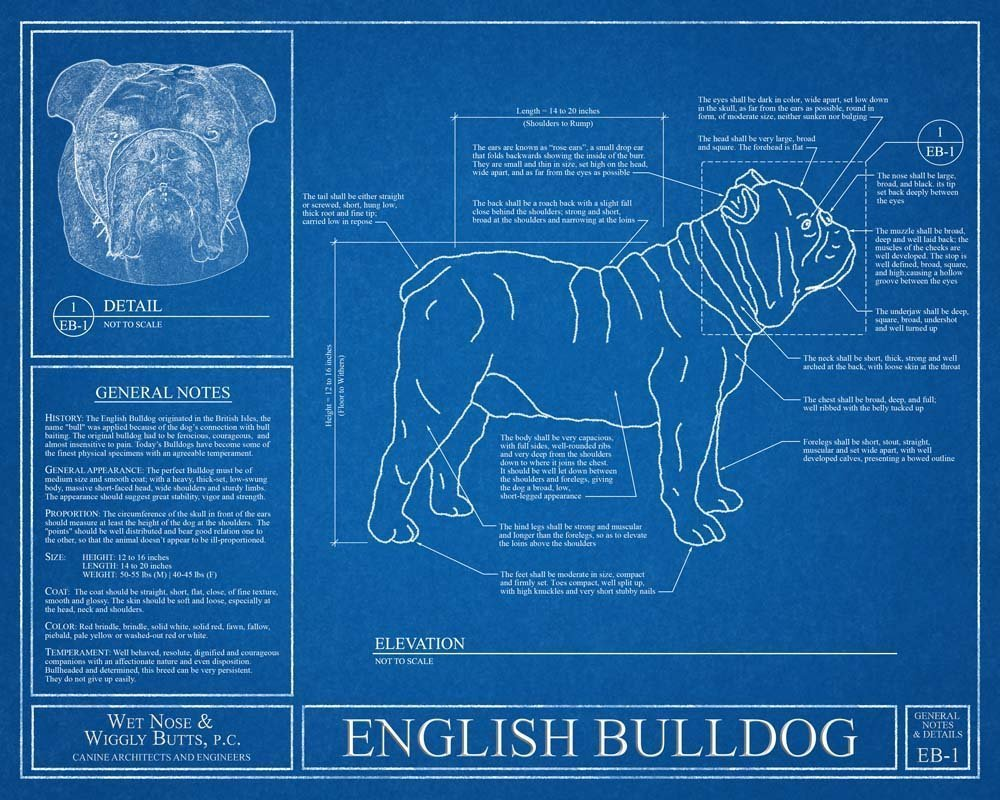 Amazon english bulldog blueprint handmade malvernweather Choice Image