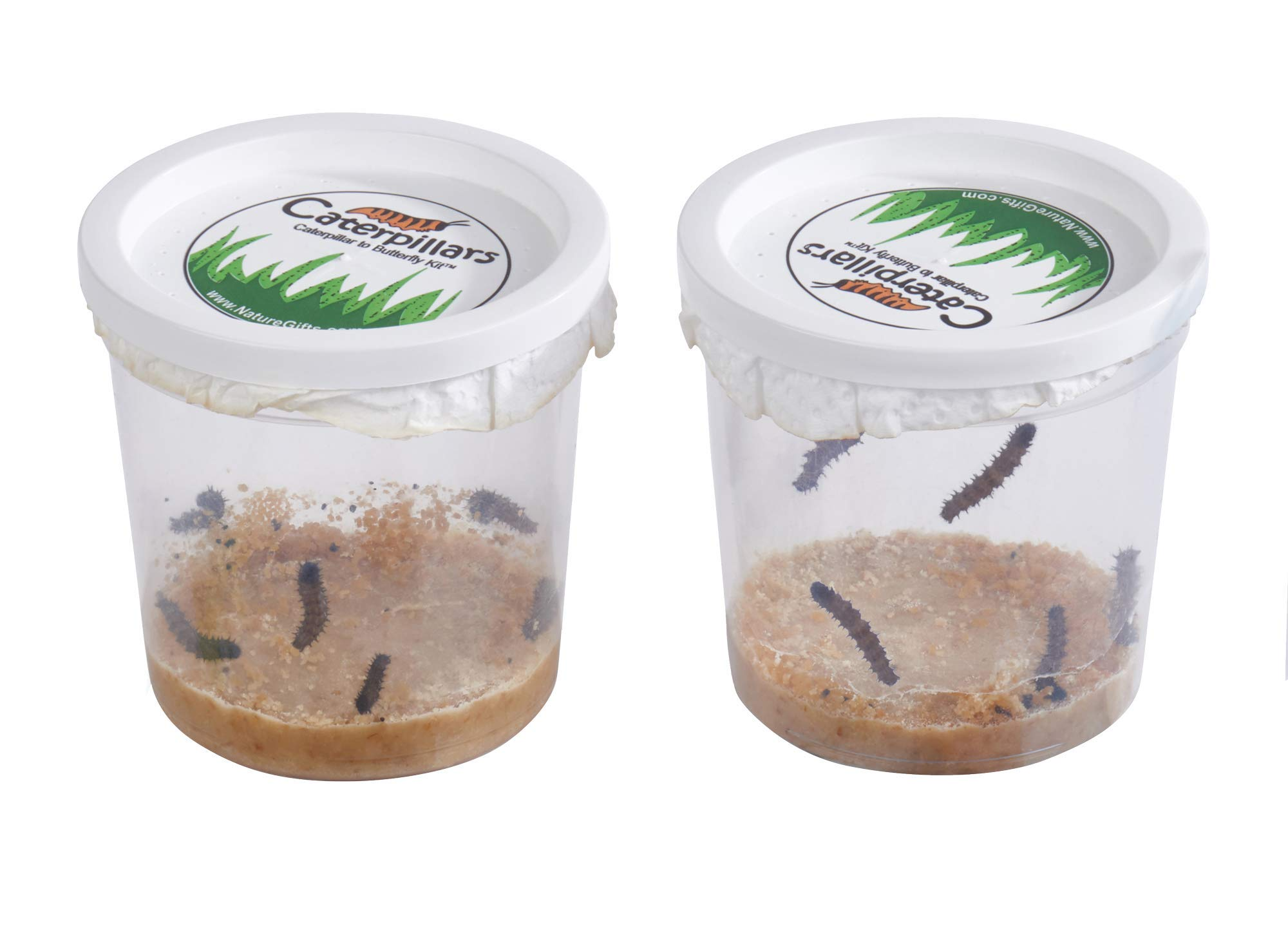 Nature Gift Store 10 Live Caterpillars Shipped Now- Butterfly Kit Refill ONLY