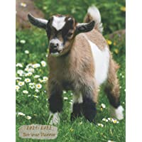 """Image for 2021-2022 Two Year Planner: see it bigger 8.5""""x11"""" Daily Weekly & Monthly Yearly Agenda Calendar Academic Planner Time Management Diary with To Do ... Jan 1, 2021 to Dec 31, 2022 Goats Lover"""