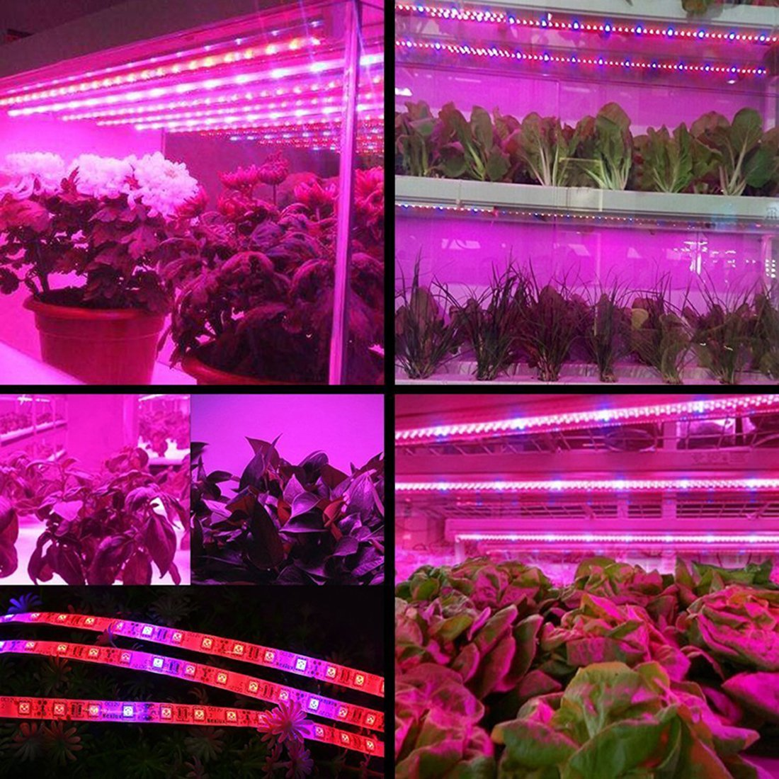 PINCHU LED Plant Grow Lights 1M 2M 3M 4M 5M SMD 5050 DC12V Flexible LED Grow Strip Light For Greenhouse Hydroponics Plant Vegetable,3Red1blue,1M