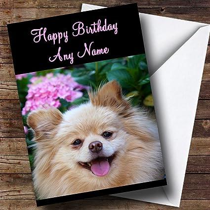 Amazoncom Pomeranian Dog Personalized Birthday Greetings Card