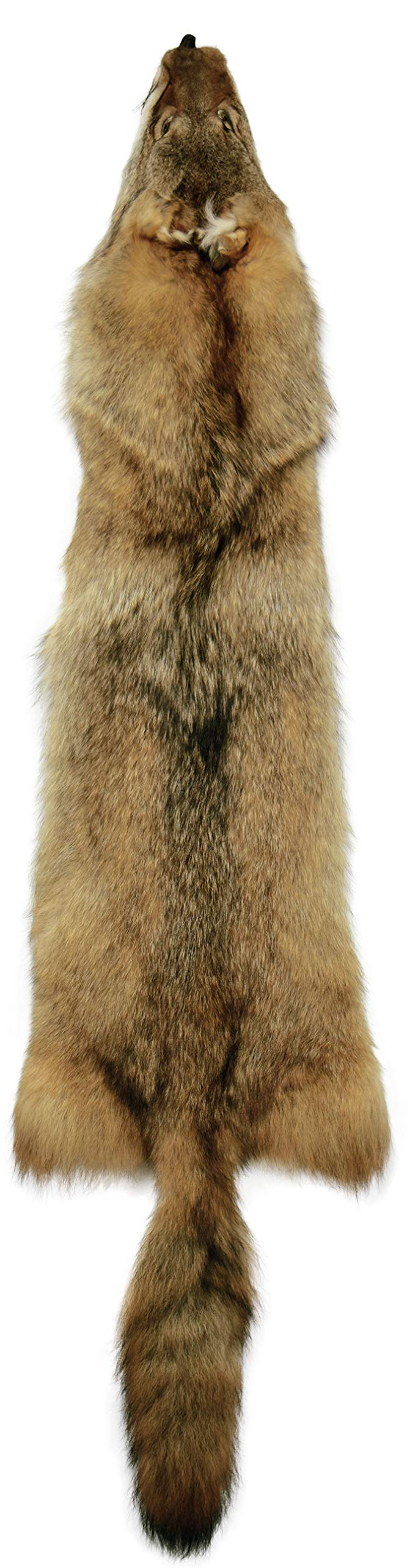 Professionally Tanned Coyote Fur Pelt with Tail & Feet 55'' - 1 Pelt