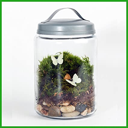 Buy Enchanted Garden Diy Terrarium Kit Online At Low Prices In India