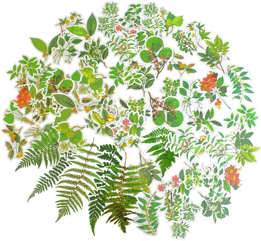 66 Pcs Fern Leaves and Nature Stickers, Decorative Natural Stickers for Laptop, Water Bottles, Scrapbook, Luggage, Windows, Phone, Notebooks, Album