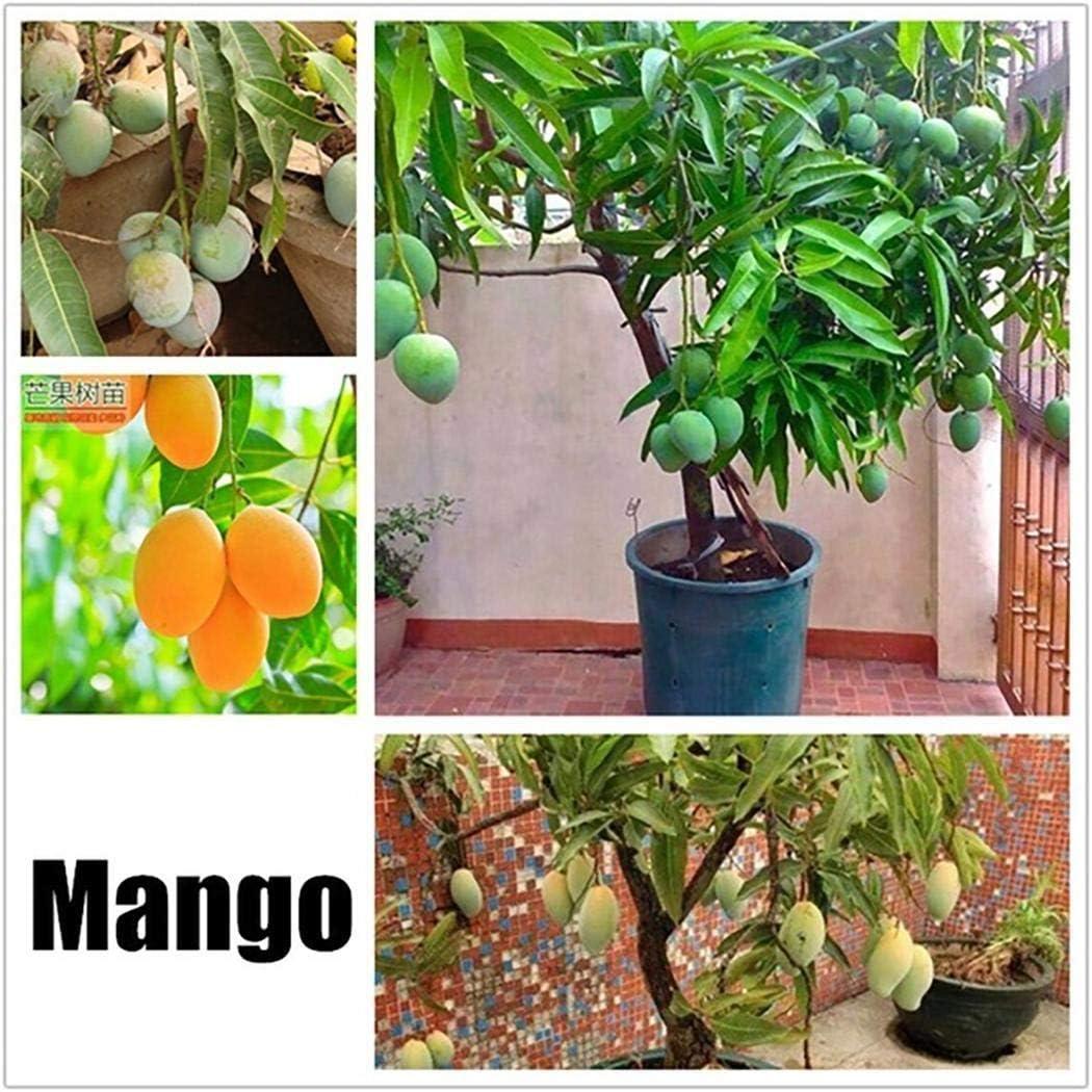 OIYINM77 Perennes Semillas de frutas templadas Plantas de jardín Árbol Bonsai Semillas Semillas