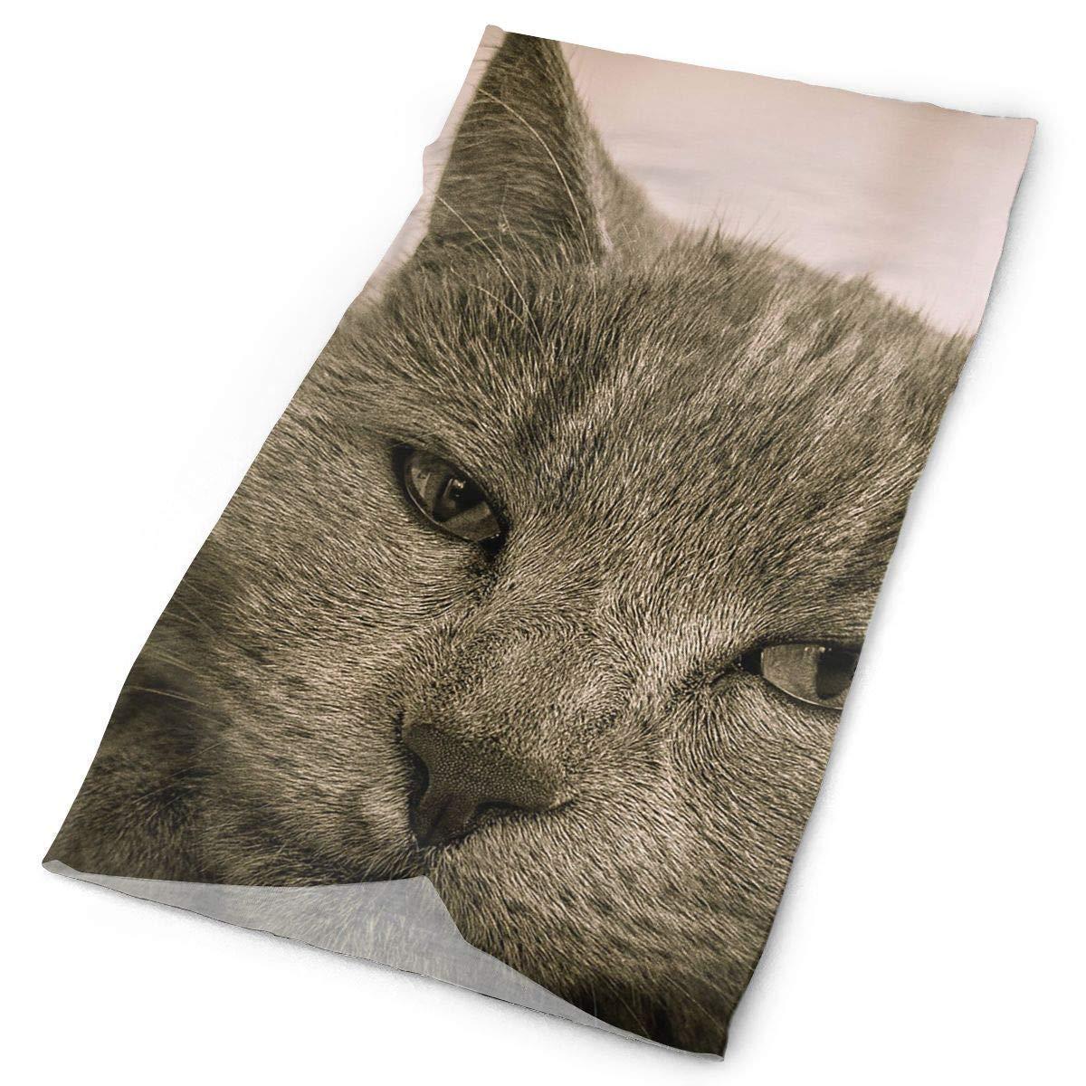 Bikofhd Stirnbänder graue Katze Kopfbedeckung Bandana Schweißband Gamasche Kopf Wickeln Maske Hals Outdoor Schal Unisex3