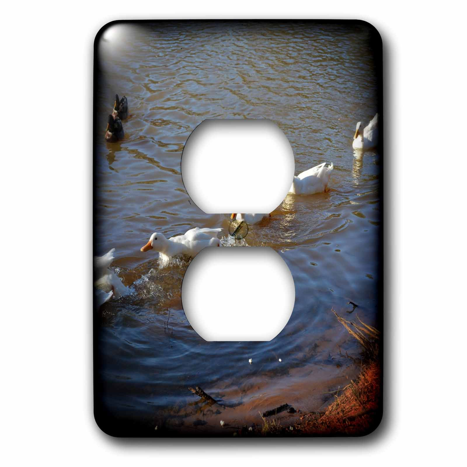 3dRose WhiteOaks Photography and Artwork - Ducks - All Ducks in a Row is a photo of a bunch of ducks swimming together - Light Switch Covers - 2 plug outlet cover (lsp_265327_6)