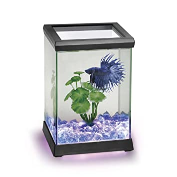 Ocean Free AT619A Kit Betta Space Led, Negro: Amazon.es: Productos para mascotas