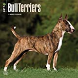 2017 Monthly Wall Calendar - Bull Terriers