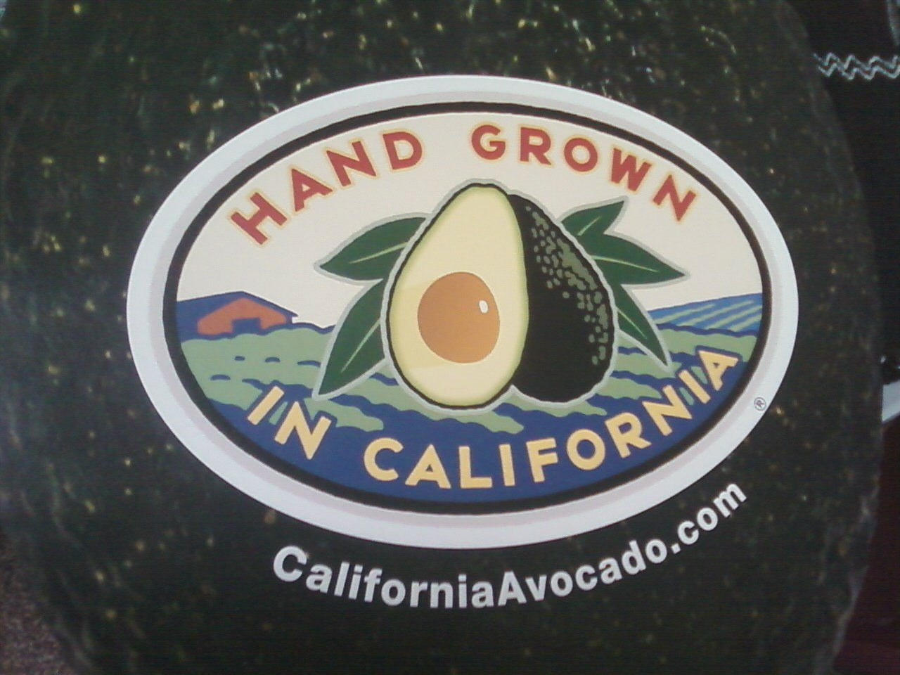 Big and Tall-- Jumbo California Avocados - Gift Box