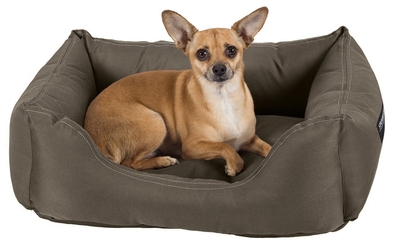 Amazon : STAINMASTER Comfy Couch Pet Bed, Small 26-By-19 Inch, Olive :  Pet Supplies