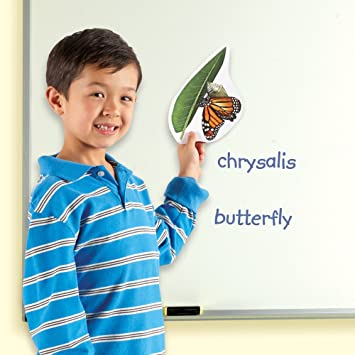 Learning Resources - Imán [Importado de Inglaterra]: Learning Resources Giant Magnetic Butterfly Life Cycle: Amazon.es: Juguetes y juegos