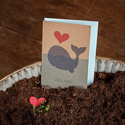 Carta de amor/Boda