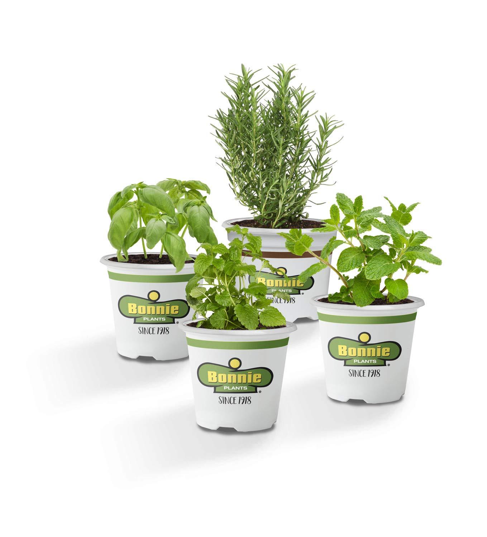 Bonnie Plants 4P407 Bug Bouncing Garden (4-PACK - Basil, Mint, Rosemary, Lemon Balm)
