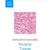 Histology flashcards: Muscle Tissue: Learn all tissues on the go (Kenhub Flashcards Book 67) (English Edition)