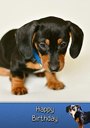 Dachshund Birthday Card Sausage Dog Happy Birthday Card by The Dachsund Store