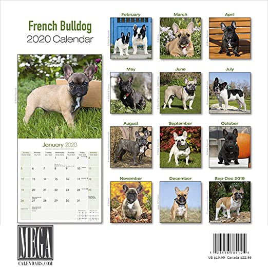 French Bulldog Calendar 2020 - Dog Breed Calendar - Wall Calendar 2019-2020