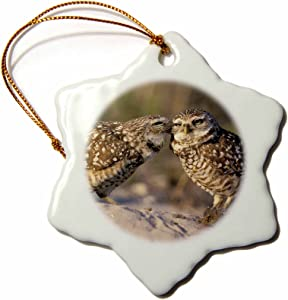 3dRose orn_83697_1 Florida, Fort Myers Burrowing Owl Pair NA02 CAD0034 Claudia Adams Snowflake Porcelain Ornament, 3-Inch