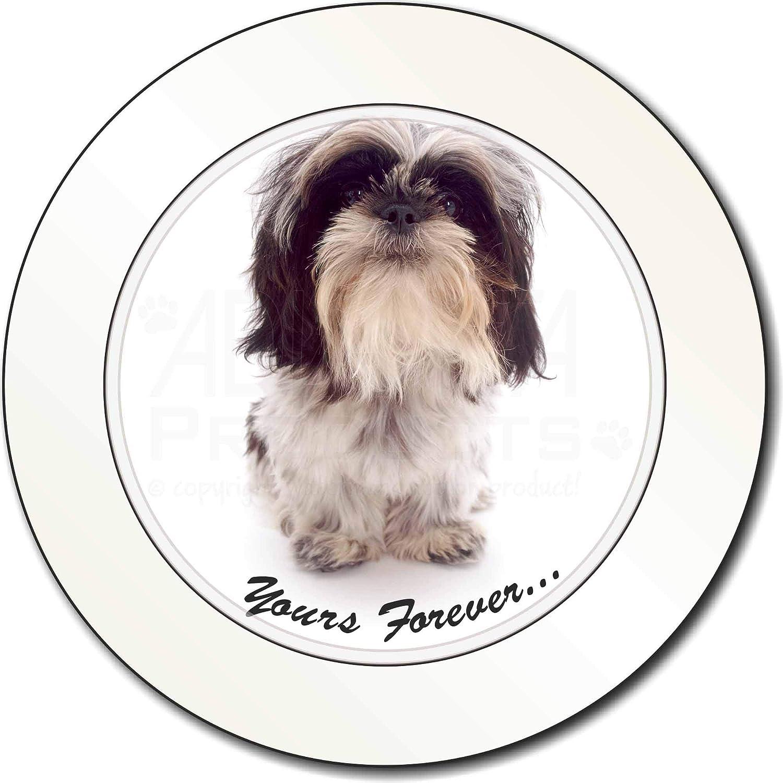 Advanta Group Shih Tzu Dog-Love Car//Van Permit Holder//Tax Disc Gift