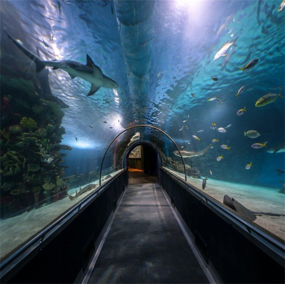 lfeey 6 x 6ft海洋水族館トンネルBackdrop LargeシャコガイOceanarium廊下Underwater Shark Fishes Sea Water写真背景フォトスタジオ小道具イベントパーティ用   B07F7XKK4T