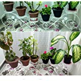 Magic Matels Iron Pot Stand,Flower Pot Stand, Flower pots for Garden, Iron Stand, Iron Stand for Plants, Iron Stand for pots,