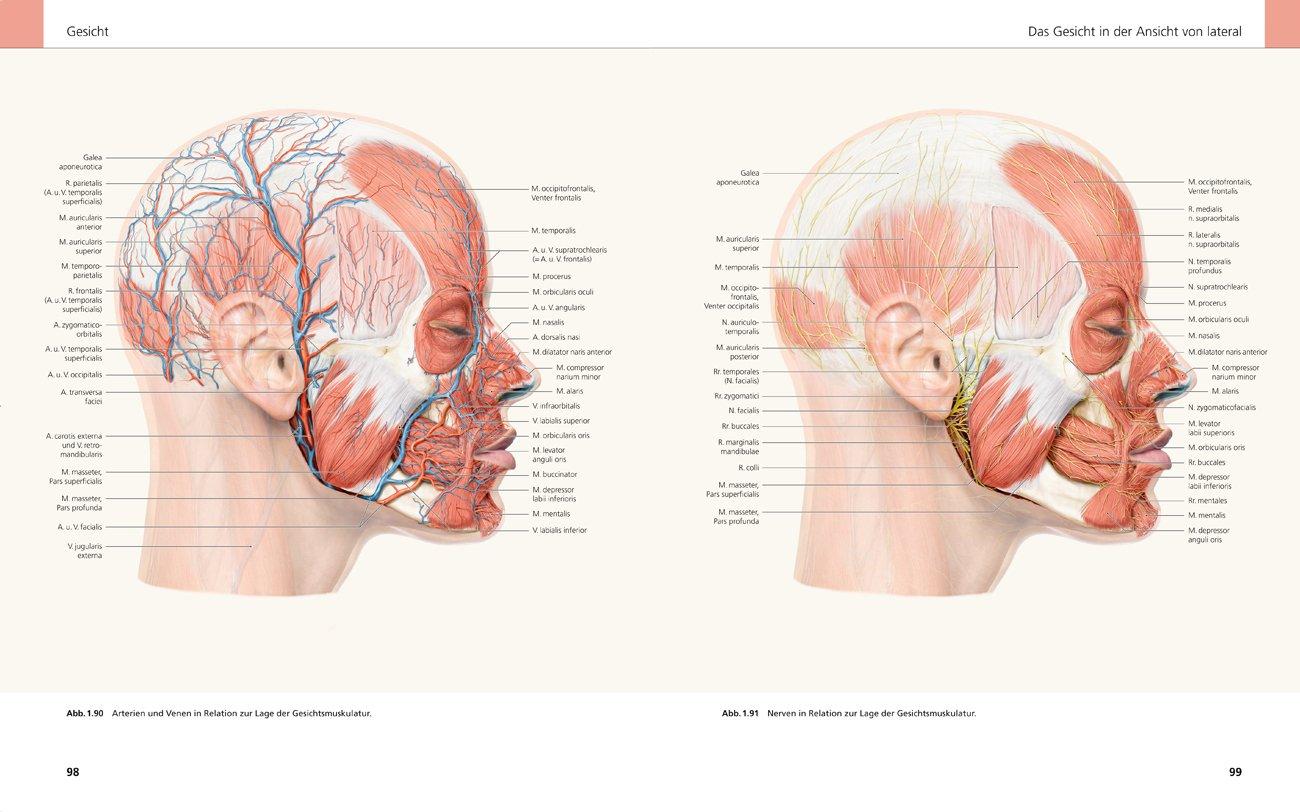 Ziemlich Anatomie Eines Gesichts Galerie - Menschliche Anatomie ...