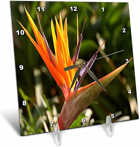 3dRose dc_46978_1 Bird of Paradise Strelitzia, Bird-of-Paradise, Flower, Primary Colors, Tropical Flower Desk Clock, 6 by 6-Inch