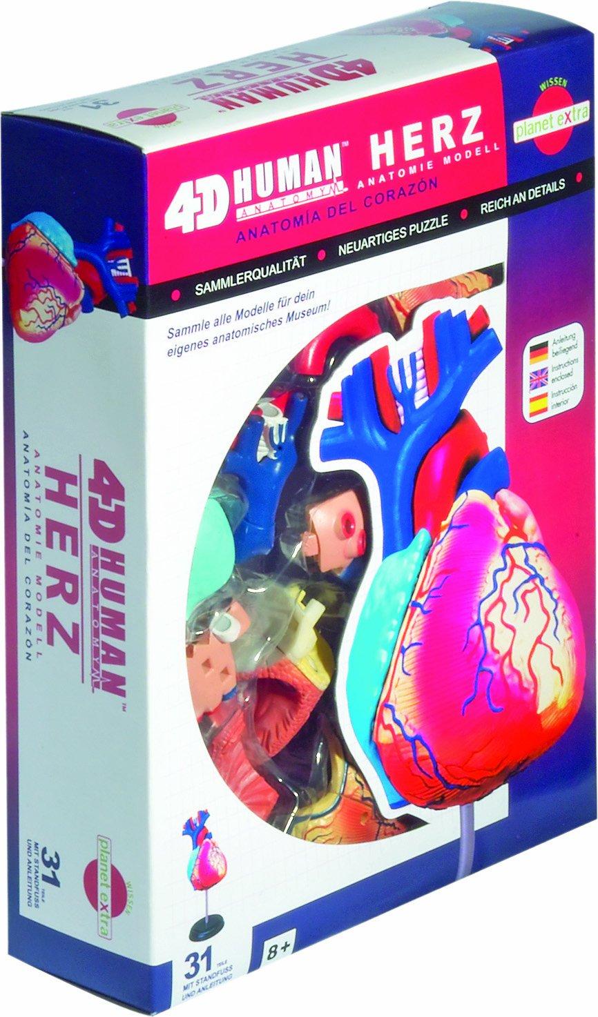 HCM Kinzel Fame Master 556052 - Anatomie Puzzle Herz: Amazon.de ...